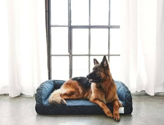 Dog-Bed.jpg?strip=all&lossy=1&quality=70&resize=562%2C429&ssl=1